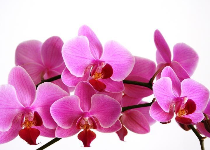 Atelier- Cultivez et soignez vos orchidées