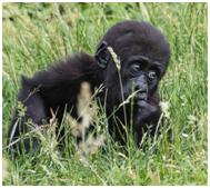« A la rencontre des Primates » - Jean-Louis Cresp @ Salle Cassini