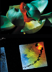"""""""Des fleurs au carré"""" par Sergio Saad @ salle Cassini"""